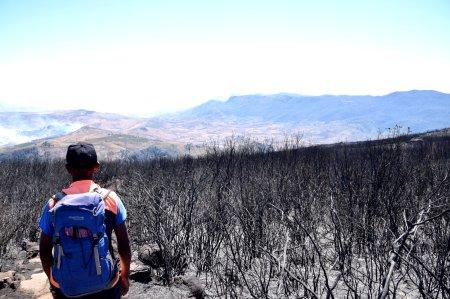 freddy im abgebrannten trockenwald